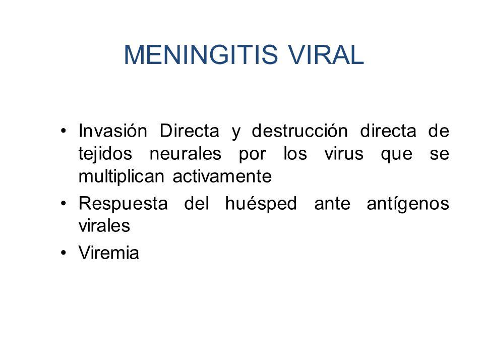 MENINGITIS VIRAL Invasión Directa y destrucción directa de tejidos neurales por los virus que se multiplican activamente Respuesta del huésped ante an