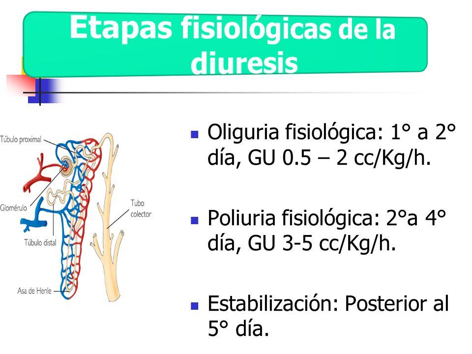Oliguria fisiológica: 1° a 2° día, GU 0.5 – 2 cc/Kg/h. Poliuria fisiológica: 2°a 4° día, GU 3-5 cc/Kg/h. Estabilización: Posterior al 5° día.