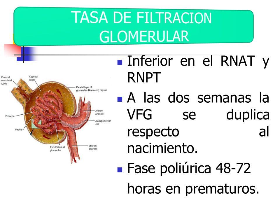Inferior en el RNAT y RNPT A las dos semanas la VFG se duplica respecto al nacimiento. Fase poliúrica 48-72 horas en prematuros.