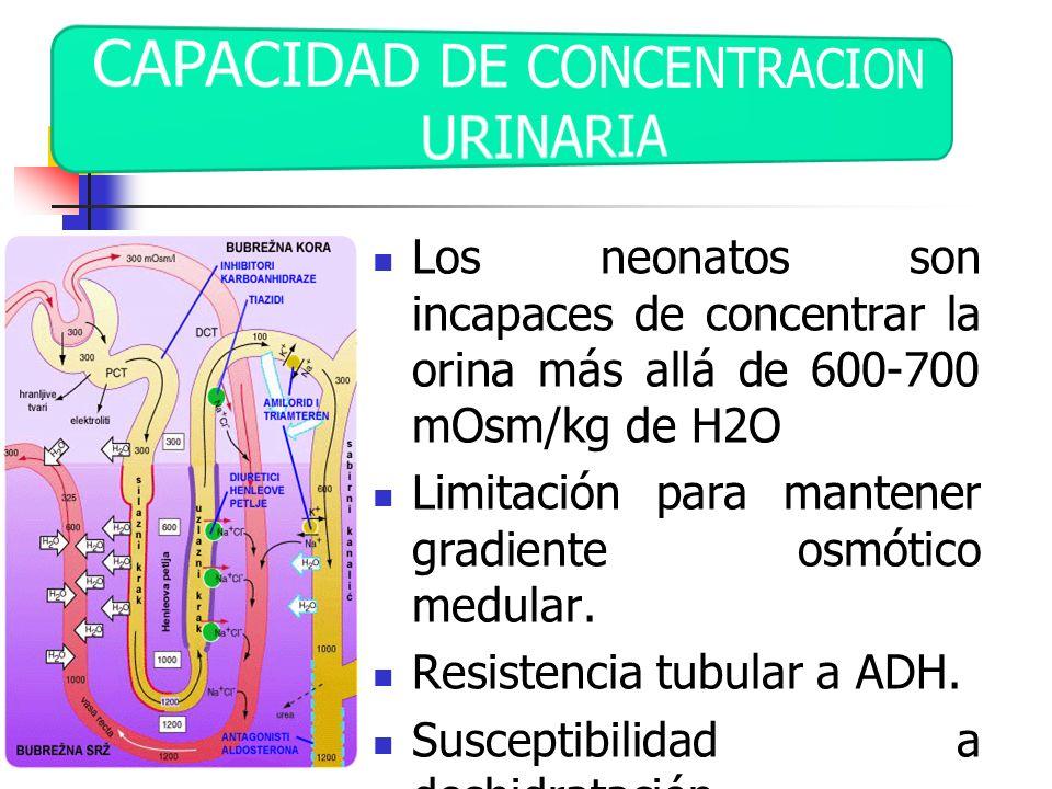Los neonatos son incapaces de concentrar la orina más allá de 600-700 mOsm/kg de H2O Limitación para mantener gradiente osmótico medular. Resistencia