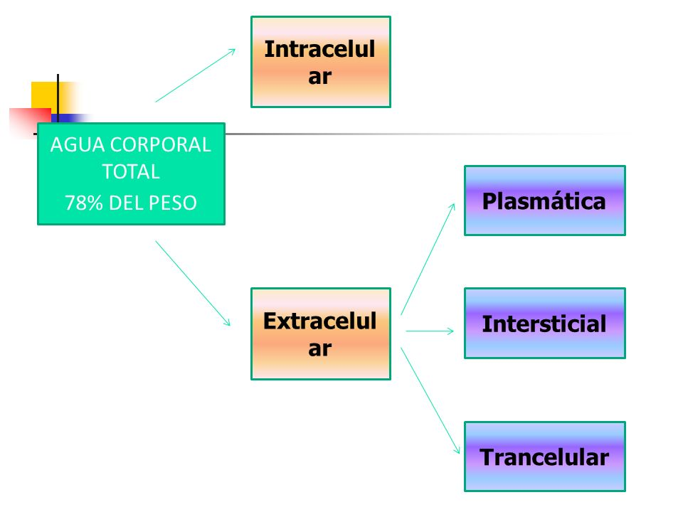 AGUA CORPORAL TOTAL 78% DEL PESO Intracelul ar Extracelul ar Plasmática Intersticial Trancelular