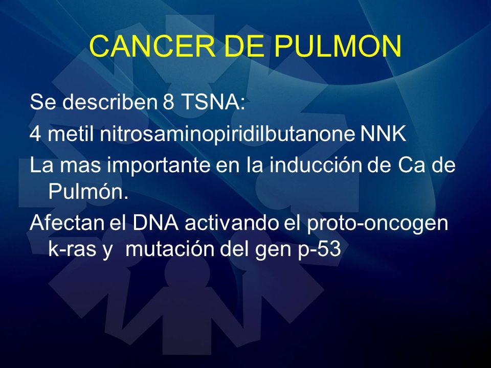 CANCER DE PULMON Se describen 8 TSNA: 4 metil nitrosaminopiridilbutanone NNK La mas importante en la inducción de Ca de Pulmón. Afectan el DNA activan