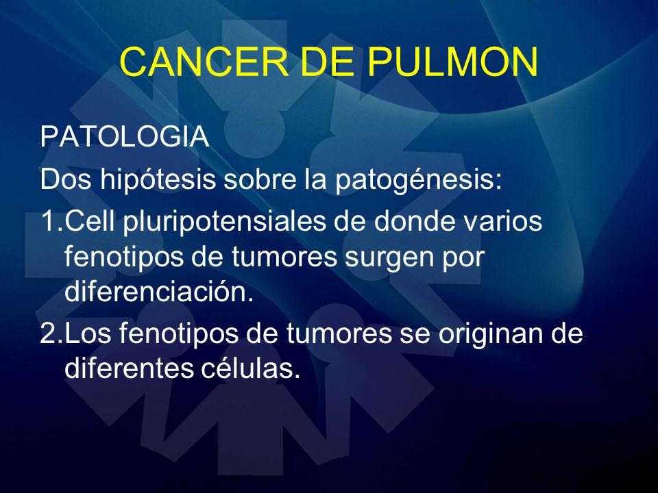 CANCER DE PULMON PATOLOGIA Dos hipótesis sobre la patogénesis: 1.Cell pluripotensiales de donde varios fenotipos de tumores surgen por diferenciación.