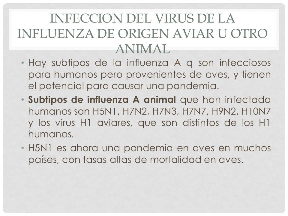 INFECCION DEL VIRUS DE LA INFLUENZA DE ORIGEN AVIAR U OTRO ANIMAL Hay subtipos de la influenza A q son infecciosos para humanos pero provenientes de a