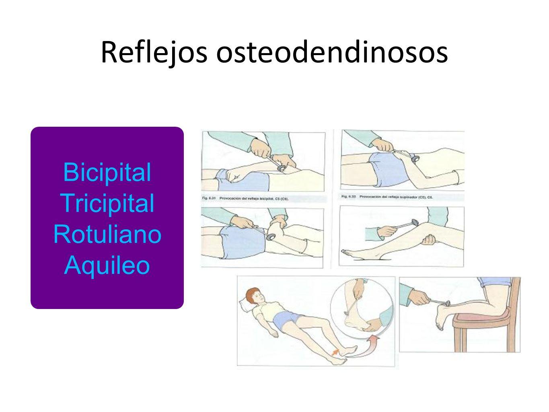 Reflejos osteodendinosos Bicipital Tricipital Rotuliano Aquileo