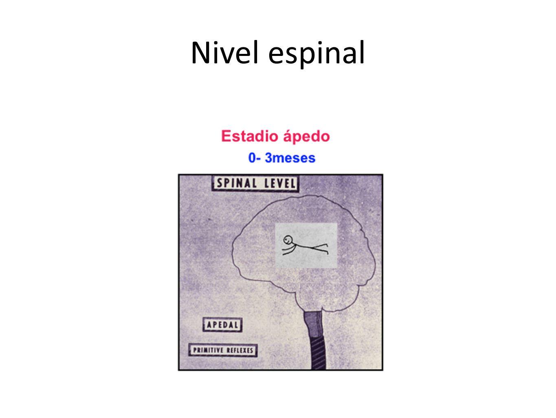 Nivel espinal
