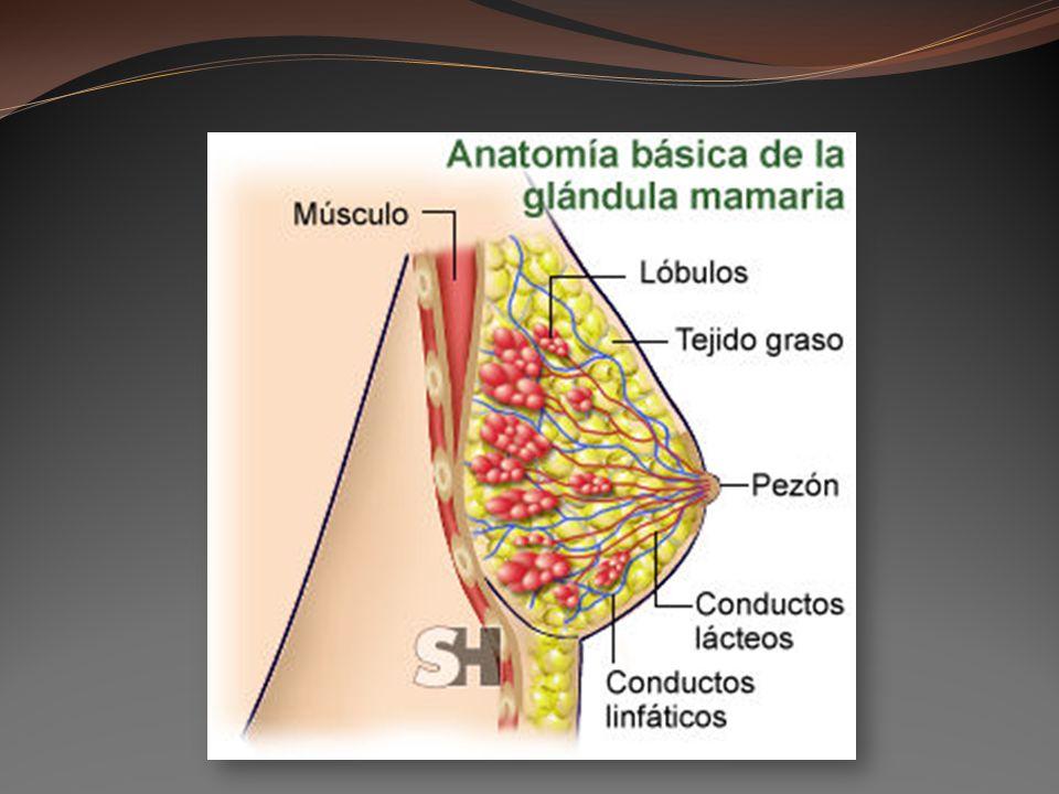 USAR OTRA DROGA / EVITAR SI ES POSIBLE Litio Cloranfenicol Quinolonas (Ciprofloxacina) Tiazidas Metronidazole Derivados de la ergotamina Famotidina, cimetidina Alcohol Alcohol Nicotina Nicotina