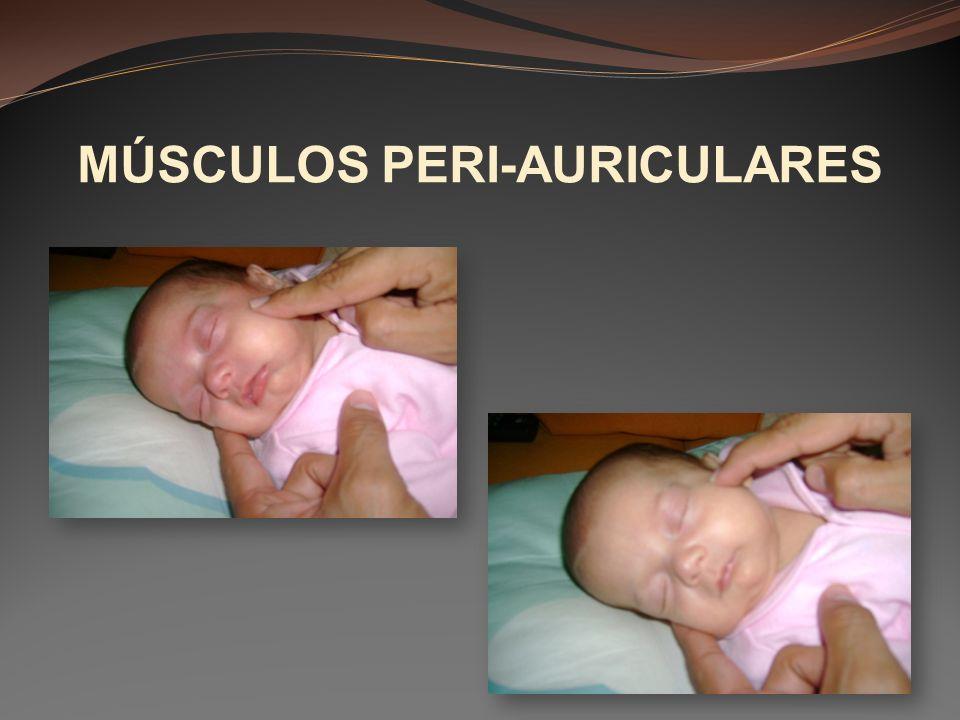 MÚSCULOS PERI-AURICULARES