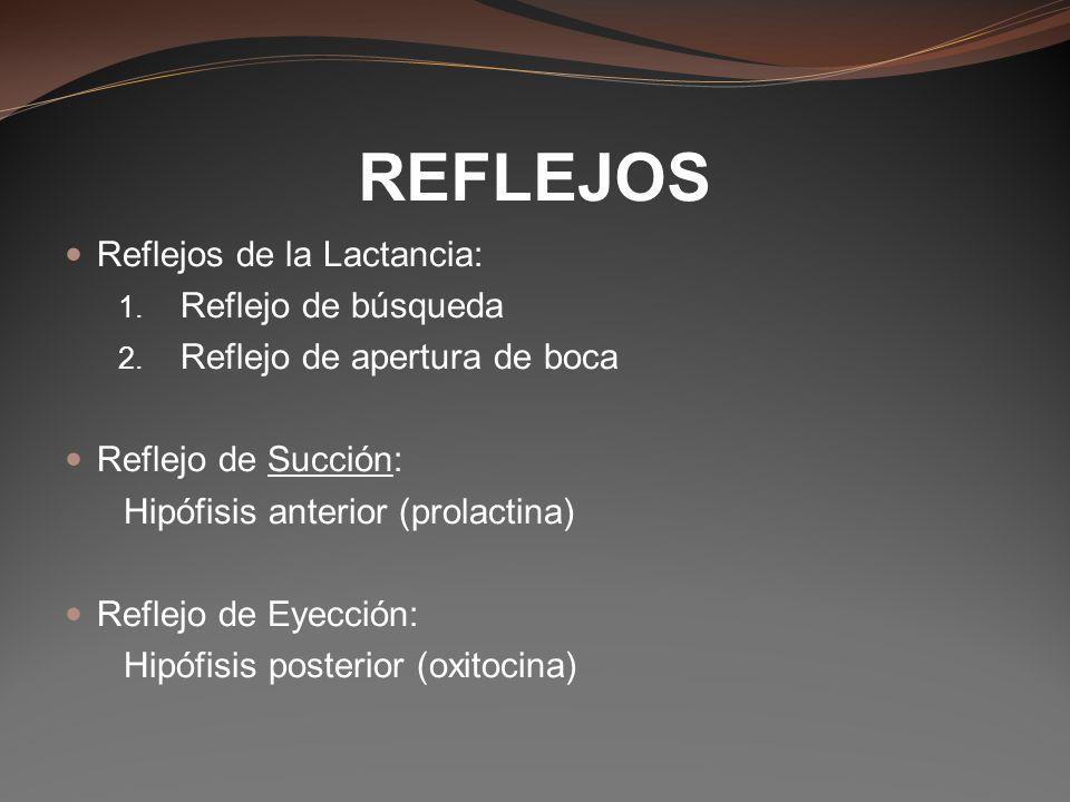 Reflejos de la Lactancia: 1. Reflejo de búsqueda 2. Reflejo de apertura de boca Reflejo de Succión: Hipófisis anterior (prolactina) Reflejo de Eyecció