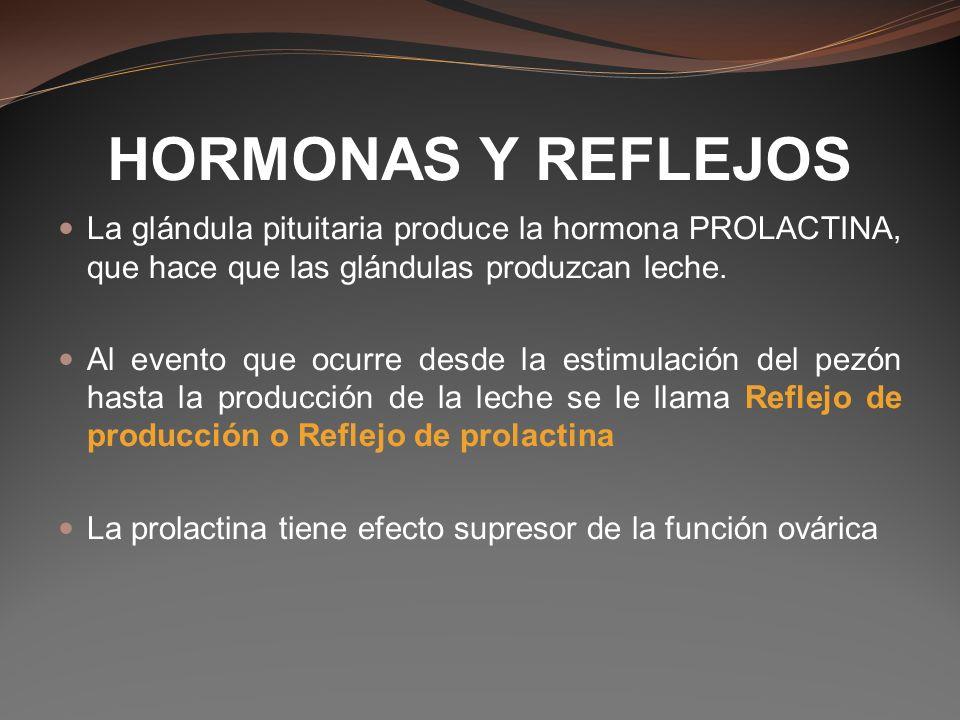 HORMONAS Y REFLEJOS La glándula pituitaria produce la hormona PROLACTINA, que hace que las glándulas produzcan leche. Al evento que ocurre desde la es