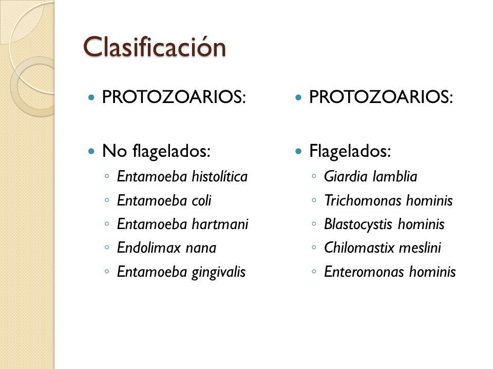 Clasificación PROTOZOARIOS: No flagelados: Entamoeba histolítica Entamoeba coli Entamoeba hartmani Endolimax nana Entamoeba gingivalis PROTOZOARIOS: F