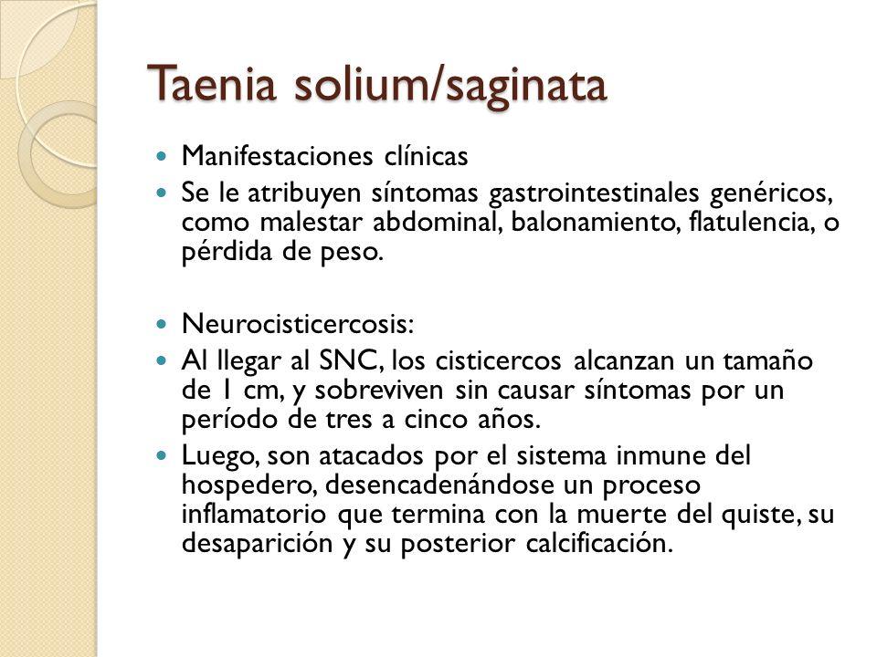 Taenia solium/saginata Manifestaciones clínicas Se le atribuyen síntomas gastrointestinales genéricos, como malestar abdominal, balonamiento, flatulen