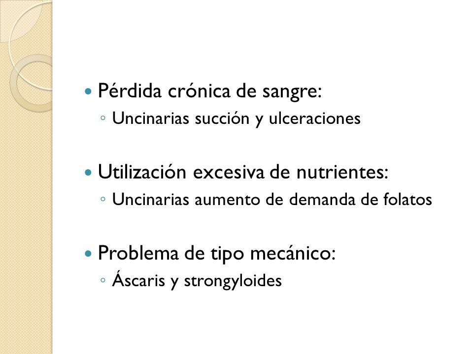 Pérdida crónica de sangre: Uncinarias succión y ulceraciones Utilización excesiva de nutrientes: Uncinarias aumento de demanda de folatos Problema de