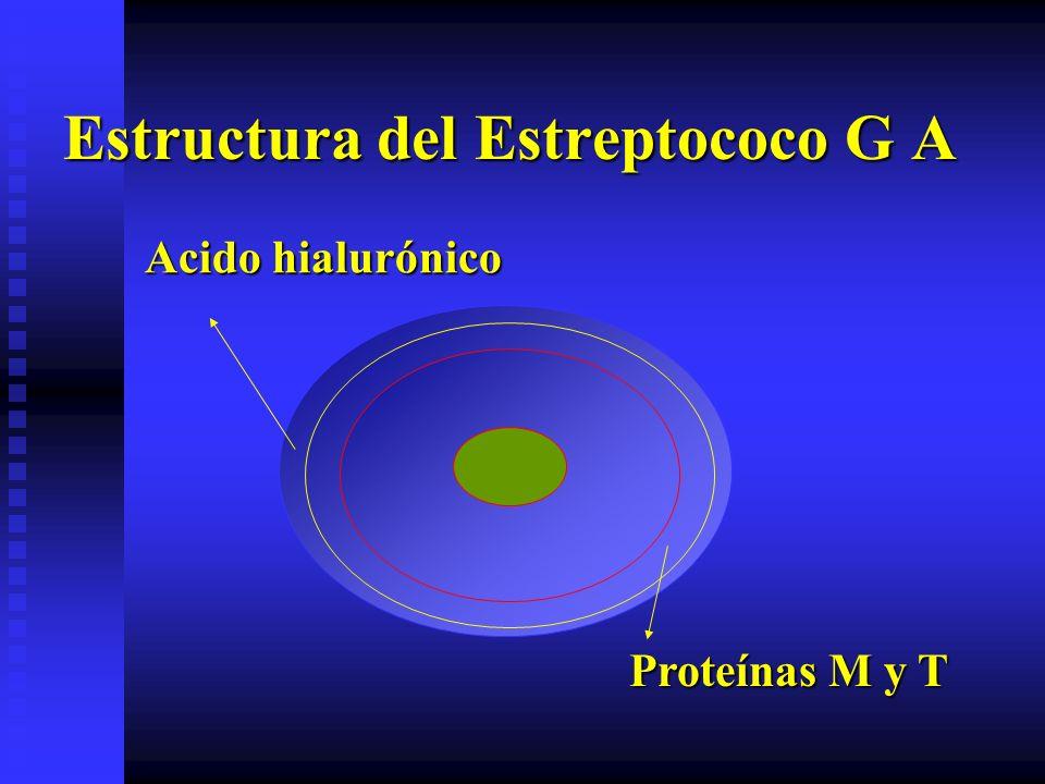 Estructura del Estreptococo G A Acido hialurónico Proteínas M y T