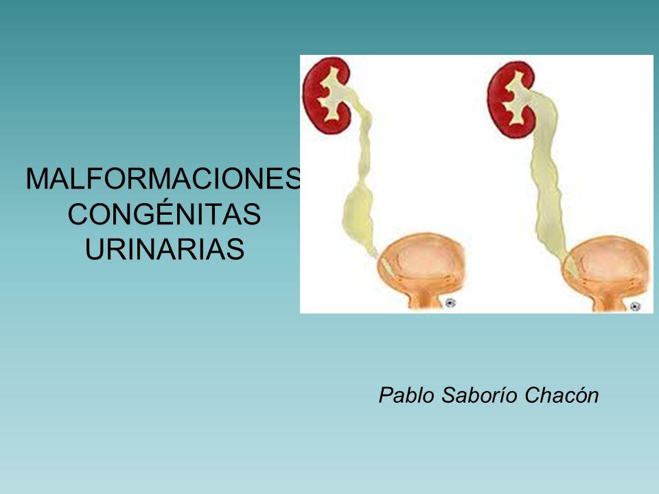 Aparato Urinario Proviene de un pliegue mesodérmico llamado mesodermo intermedio, situado a lo largo de la pared posterior de la cavidad abdominal.