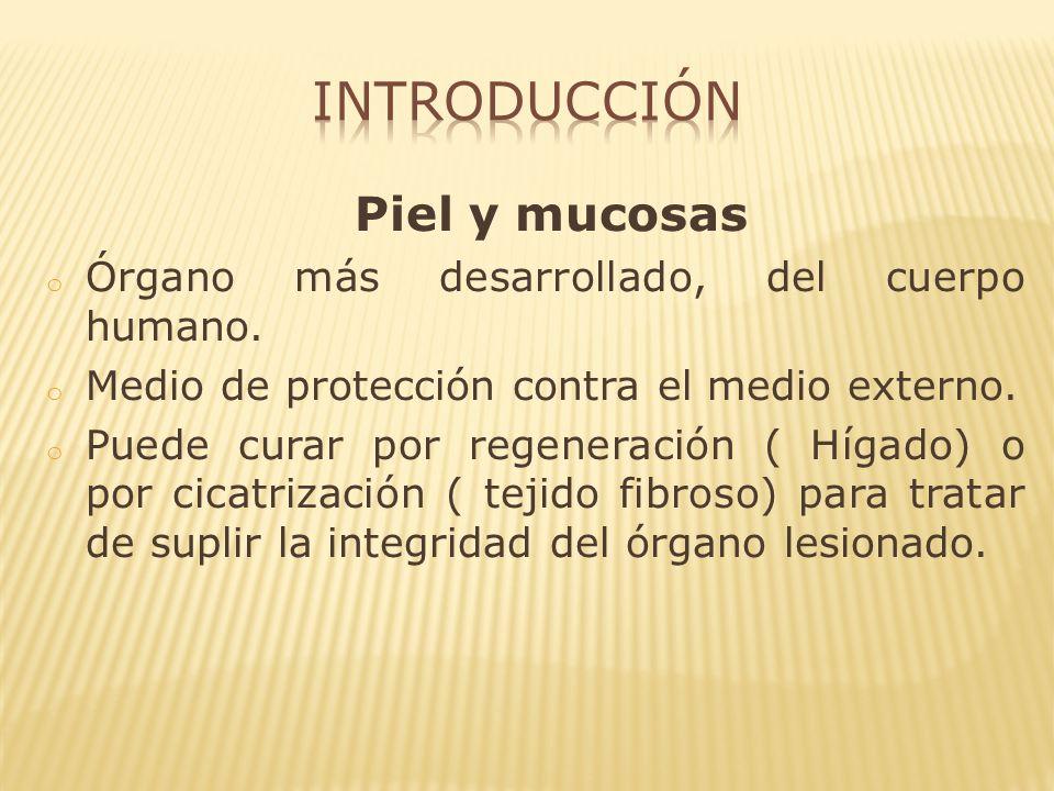 o PMN: primeras en aparecer para control de la sépsis. o Linfocitos: anticuerpos específicos.