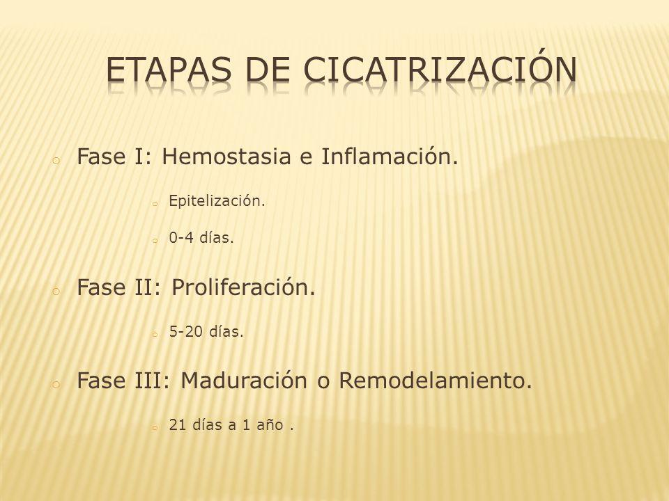 o Depósito de colágeno en la herida.o Desde el punto de vista clínico es la fase más importante.