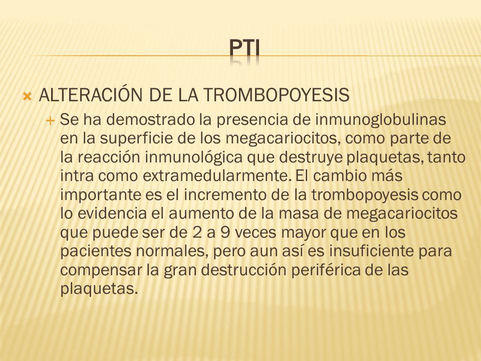 ALTERACIÓN DE LA TROMBOPOYESIS Se ha demostrado la presencia de inmunoglobulinas en la superficie de los megacariocitos, como parte de la reacción inm