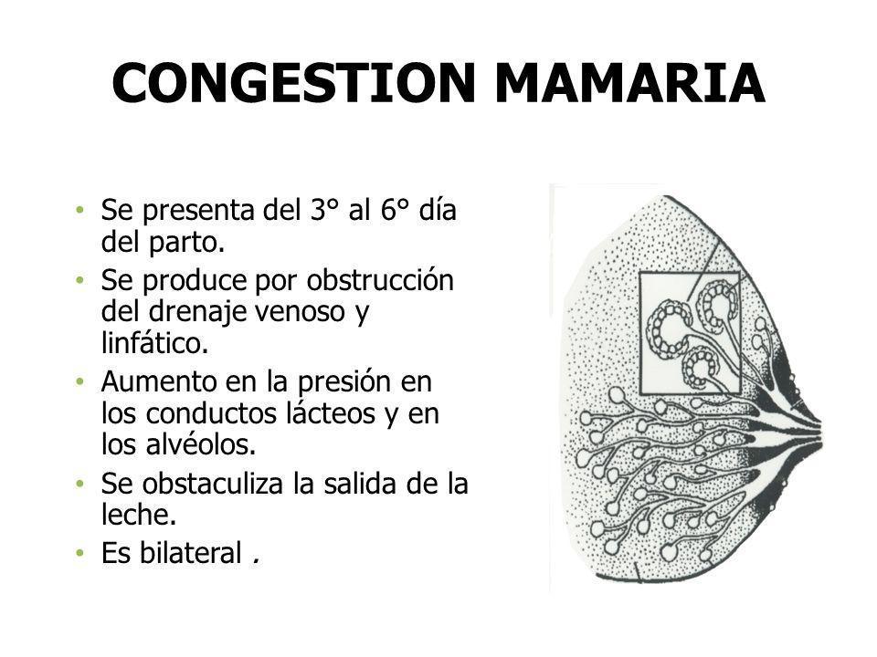 CONGESTION MAMARIA Se presenta del 3° al 6° día del parto. Se produce por obstrucción del drenaje venoso y linfático. Aumento en la presión en los con
