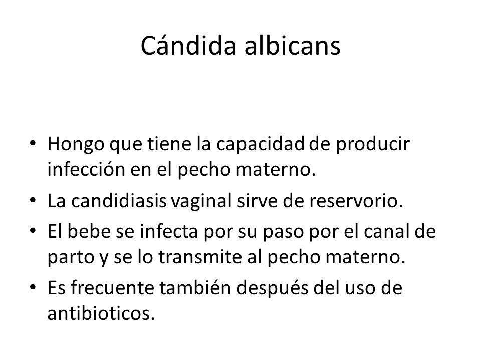 Cándida albicans Hongo que tiene la capacidad de producir infección en el pecho materno. La candidiasis vaginal sirve de reservorio. El bebe se infect