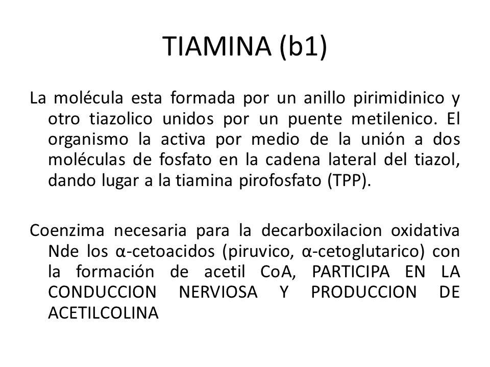 TIAMINA (b1) La molécula esta formada por un anillo pirimidinico y otro tiazolico unidos por un puente metilenico. El organismo la activa por medio de