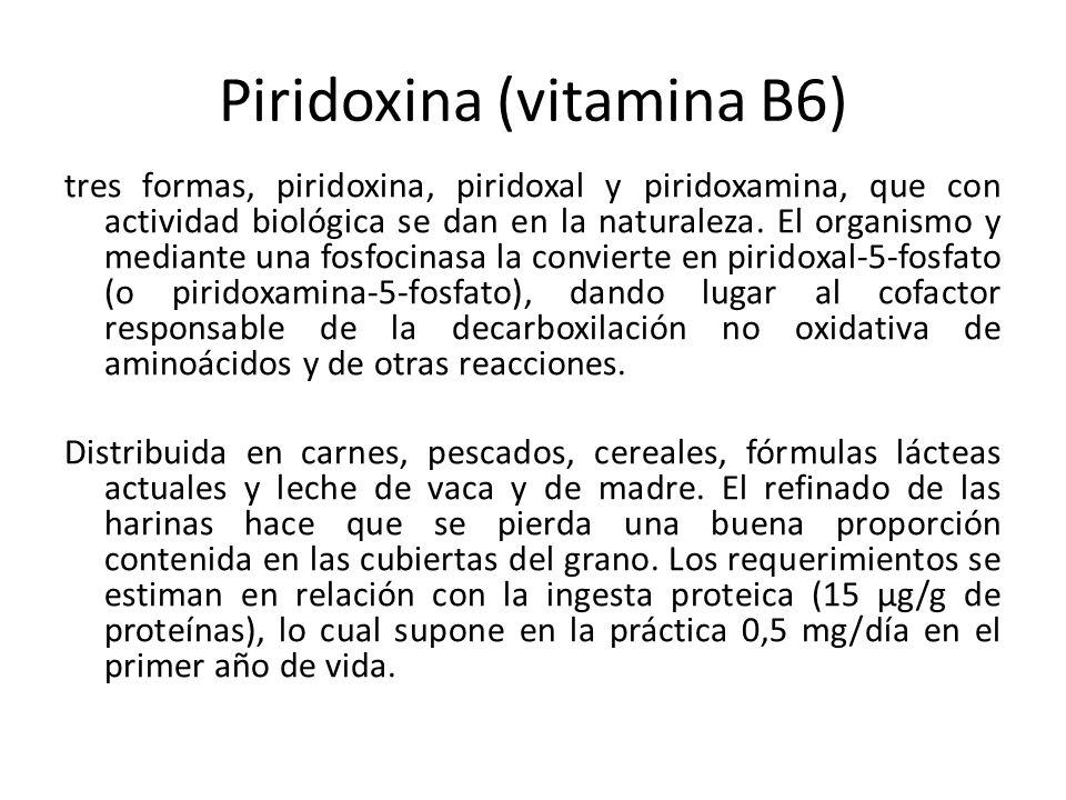 Piridoxina (vitamina B6) tres formas, piridoxina, piridoxal y piridoxamina, que con actividad biológica se dan en la naturaleza. El organismo y median