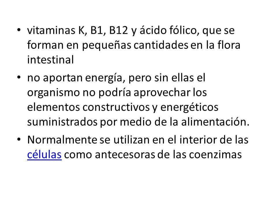 vitaminas K, B1, B12 y ácido fólico, que se forman en pequeñas cantidades en la flora intestinal no aportan energía, pero sin ellas el organismo no po