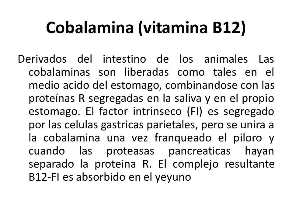 Cobalamina (vitamina B12) Derivados del intestino de los animales Las cobalaminas son liberadas como tales en el medio acido del estomago, combinandos