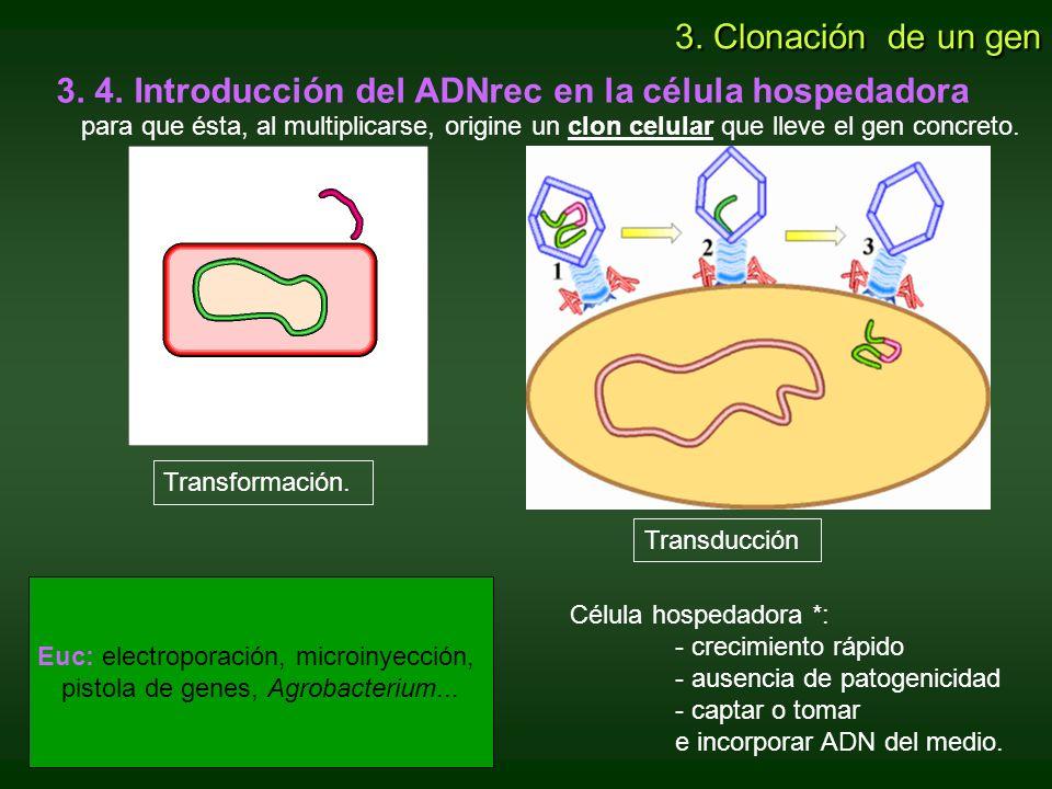 Transformación. Transducción 3. 4. Introducción del ADNrec en la célula hospedadora para que ésta, al multiplicarse, origine un clon celular que lleve