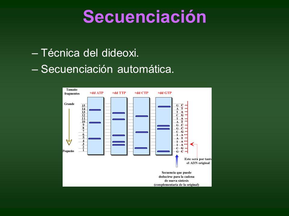–Técnica del dideoxi. –Secuenciación automática. Secuenciación