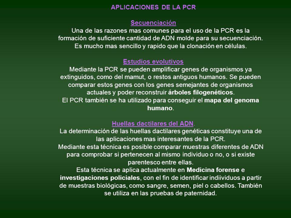 APLICACIONES DE LA PCR Secuenciación Una de las razones mas comunes para el uso de la PCR es la formación de suficiente cantidad de ADN molde para su