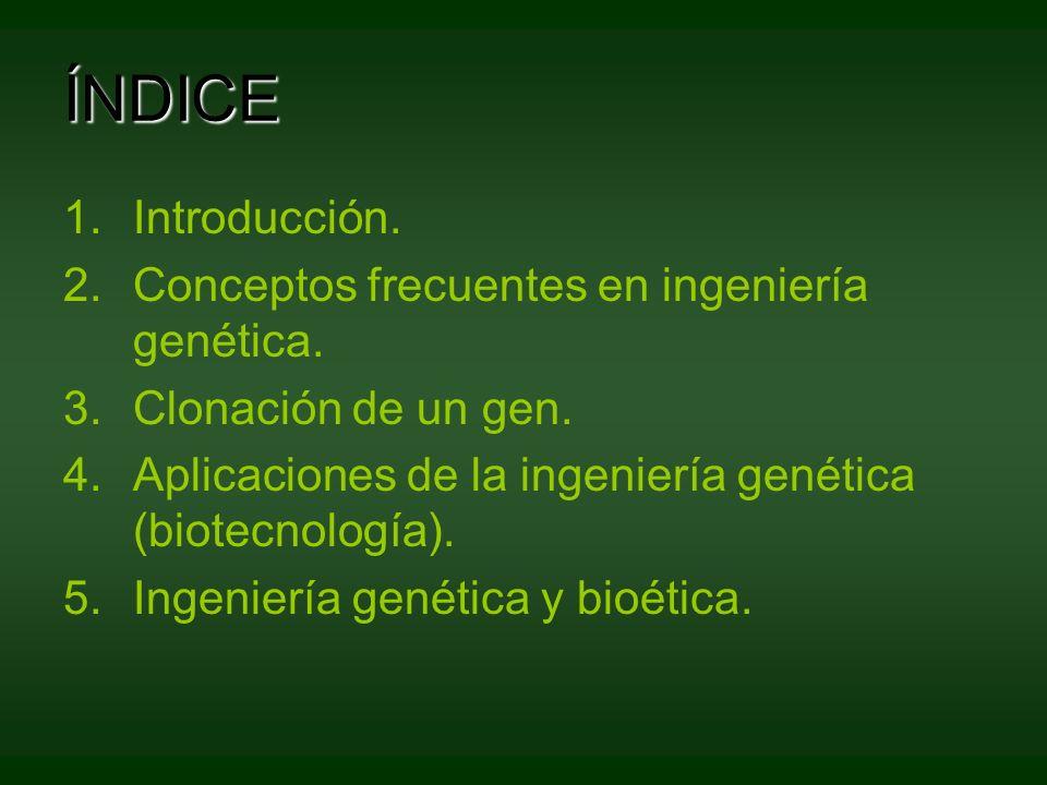 ÍNDICE 1.Introducción. 2.Conceptos frecuentes en ingeniería genética. 3.Clonación de un gen. 4.Aplicaciones de la ingeniería genética (biotecnología).
