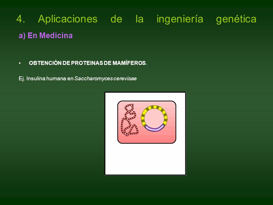 a) En Medicina OBTENCIÓN DE PROTEINAS DE MAMÍFEROS. Ej. Insulina humana en Saccharomyces cerevisae