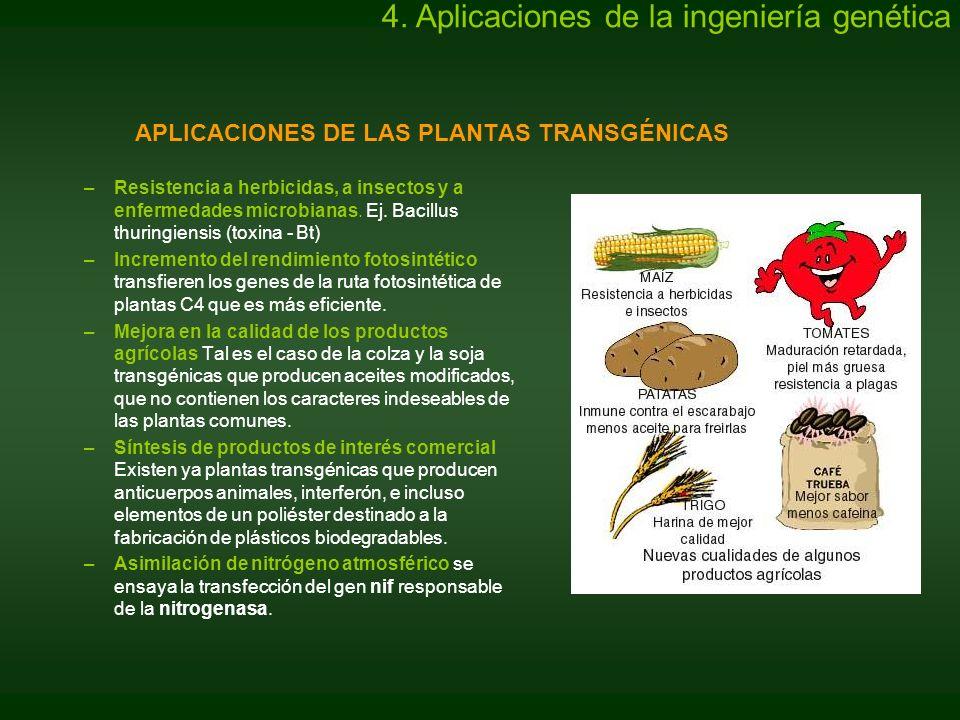 APLICACIONES DE LAS PLANTAS TRANSGÉNICAS –Resistencia a herbicidas, a insectos y a enfermedades microbianas. Ej. Bacillus thuringiensis (toxina - Bt)