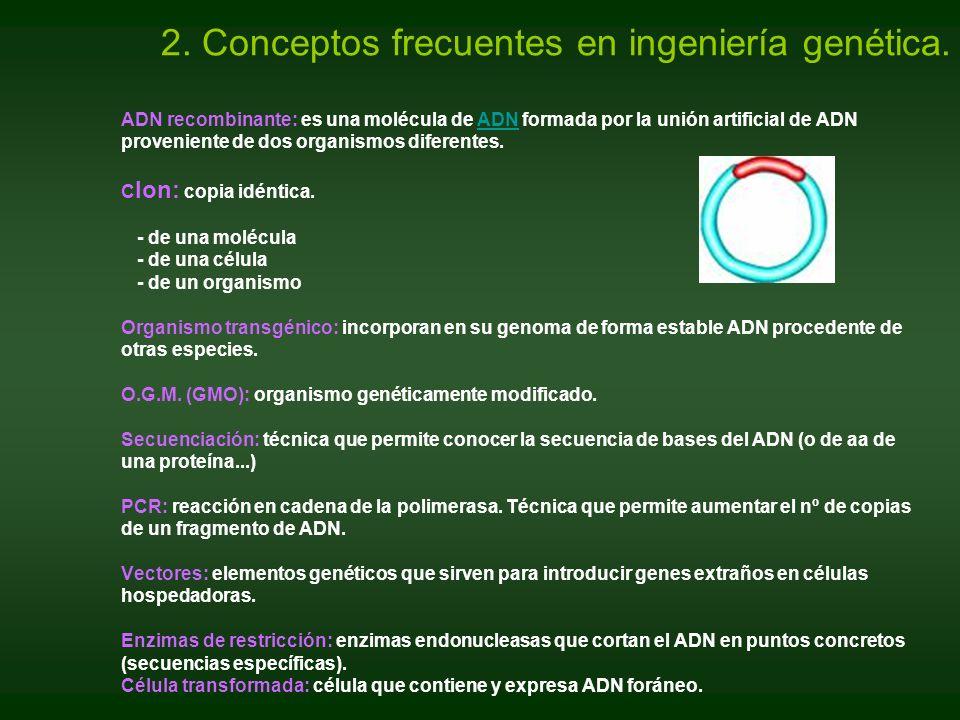 ADN recombinante: es una molécula de ADN formada por la unión artificial de ADN proveniente de dos organismos diferentes. C lon: copia idéntica. - de