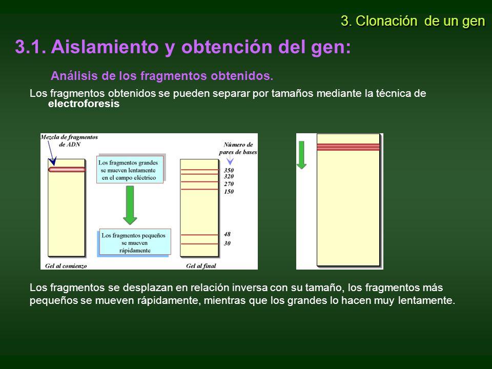 3.2.Selección del vector de clonación.