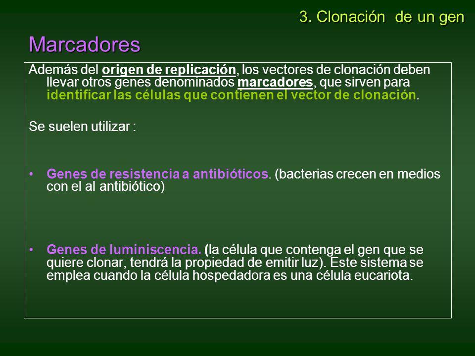 a) Aplicaciones médicas –Producción de sustancias con efecto terapéutico.