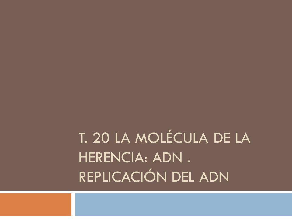 T. 20 LA MOLÉCULA DE LA HERENCIA: ADN. REPLICACIÓN DEL ADN