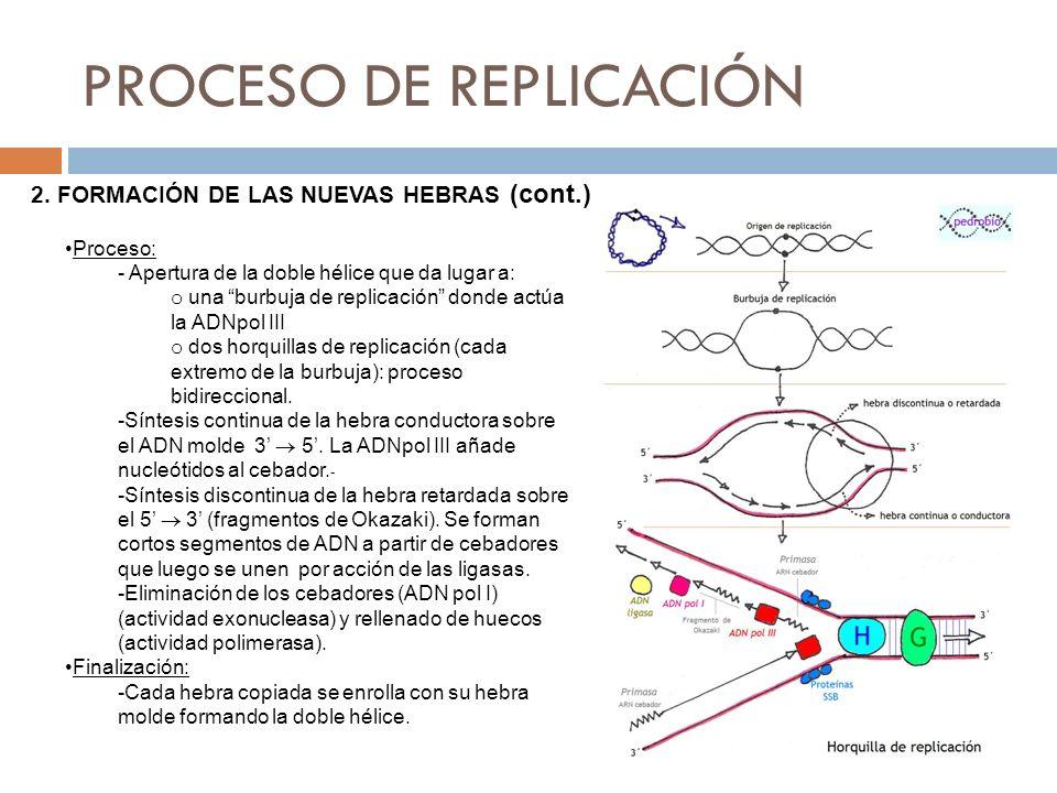 Proceso: - Apertura de la doble hélice que da lugar a: o una burbuja de replicación donde actúa la ADNpol III o dos horquillas de replicación (cada ex