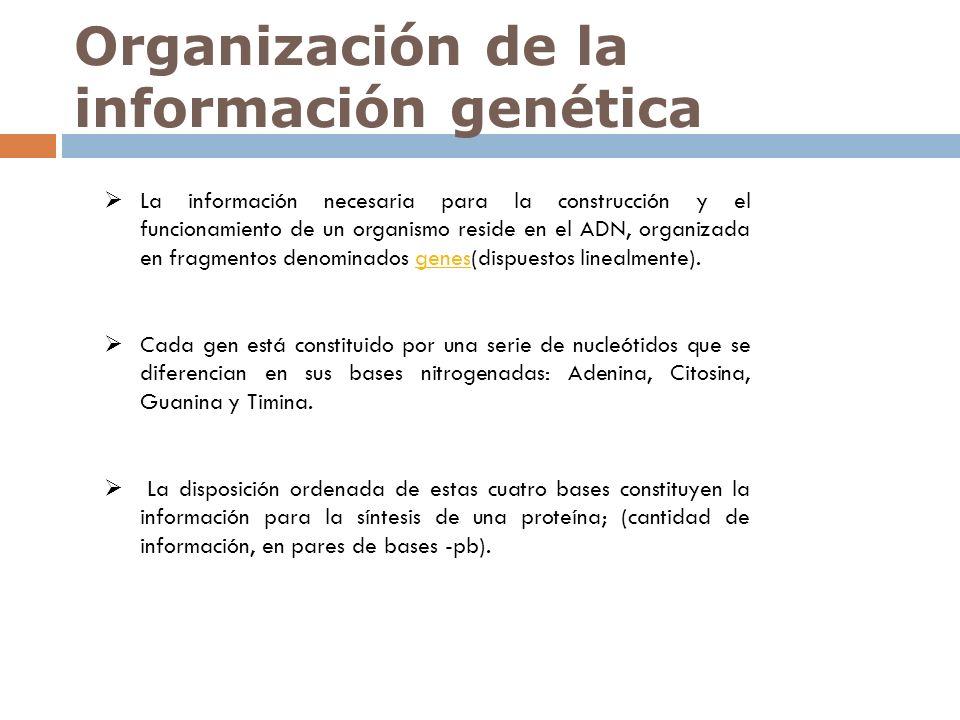 Organización de la información genética La información necesaria para la construcción y el funcionamiento de un organismo reside en el ADN, organizada