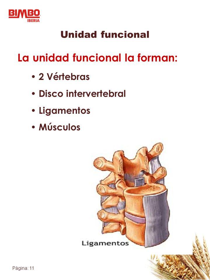 Página: 11 2 Vértebras Disco intervertebral Ligamentos Músculos Unidad funcional La unidad funcional la forman: