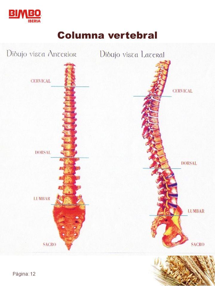 Página: 12 Columna vertebral