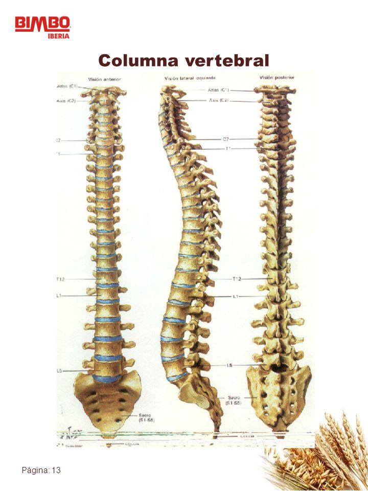 Página: 13 Columna vertebral
