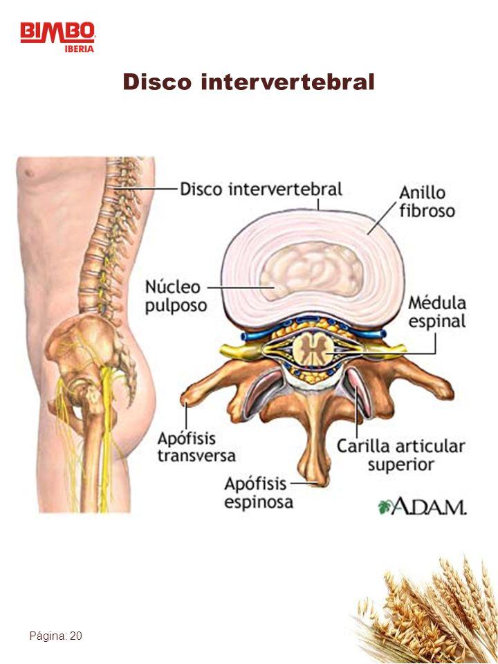 Página: 20 Disco intervertebral