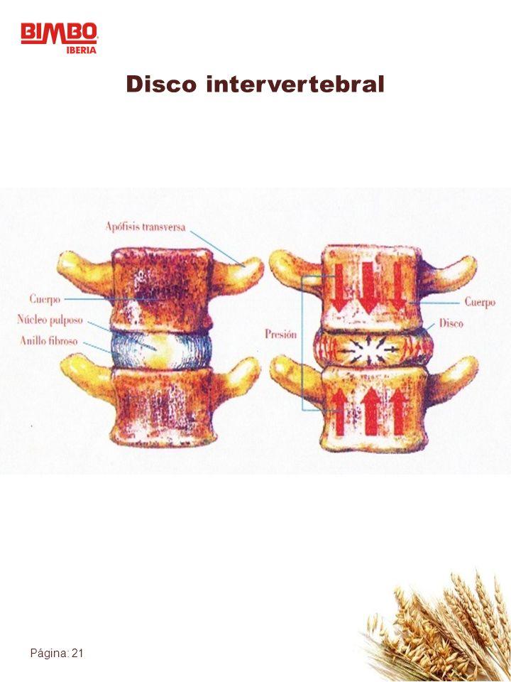 Página: 21 Disco intervertebral