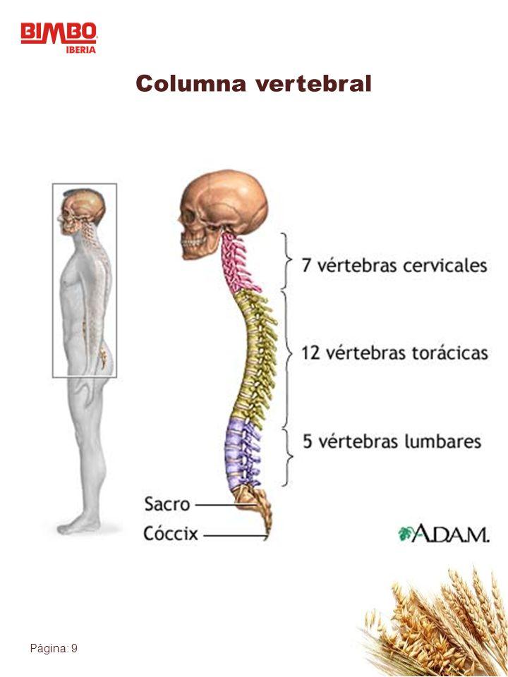 Página: 10 Unidad funcional Toda estructura mecánica debe entenderse en base a su función La columna vertebral está formada por unidades funcionales o segmentos móviles (Junghaans) La disfunción puede ayudarnos a identificar el origen del dolor