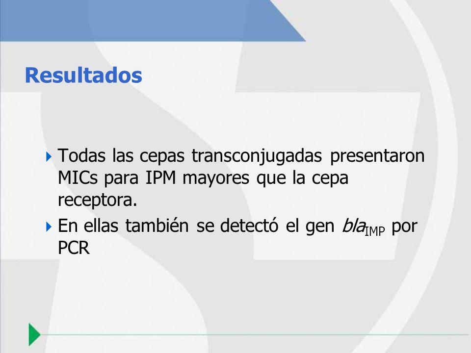 Resultados Todas las cepas transconjugadas presentaron MICs para IPM mayores que la cepa receptora. En ellas también se detectó el gen bla IMP por PCR