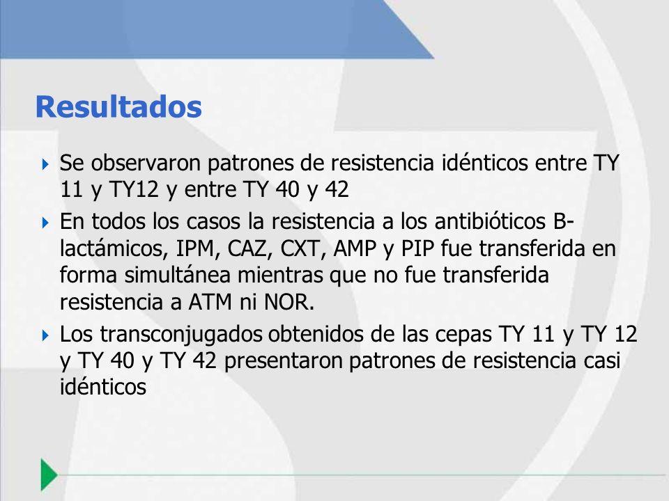Resultados Se observaron patrones de resistencia idénticos entre TY 11 y TY12 y entre TY 40 y 42 En todos los casos la resistencia a los antibióticos