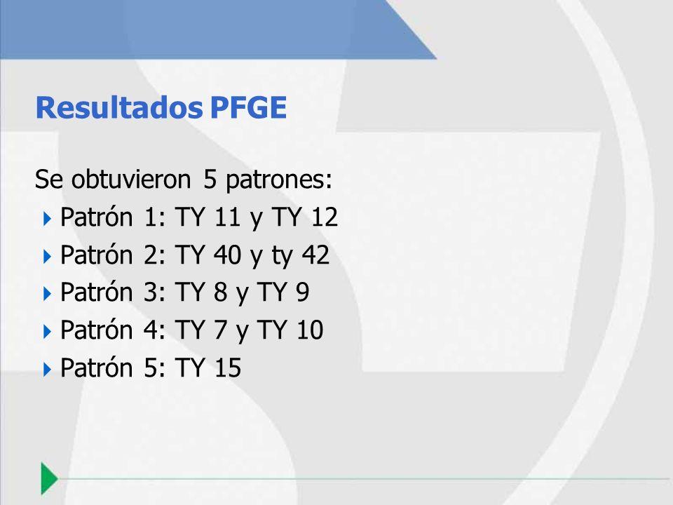 Resultados PFGE Se obtuvieron 5 patrones: Patrón 1: TY 11 y TY 12 Patrón 2: TY 40 y ty 42 Patrón 3: TY 8 y TY 9 Patrón 4: TY 7 y TY 10 Patrón 5: TY 15
