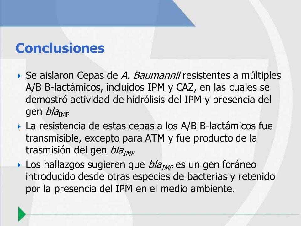 Conclusiones Se aislaron Cepas de A. Baumannii resistentes a múltiples A/B B-lactámicos, incluidos IPM y CAZ, en las cuales se demostró actividad de h